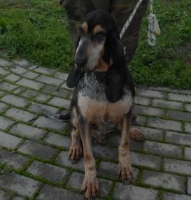 Canile modena cani da caccia adozione s o s cani da caccia for Dado arredamenti modena