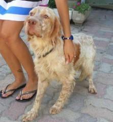 Max setter abbandonato, ora in adozione - Cosenza