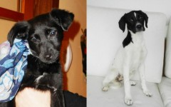 Sally e Pollon, dolci cucciole in cerca d'amore - Bergamo